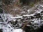 冬の沢.jpg