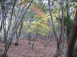 芦生 ハナノ谷段山2007.11.18 006.jpg