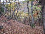 芦生 ハナノ谷段山2007.11.18 038.jpg