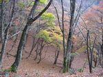 芦生 ハナノ谷段山2007.11.18 043.jpg