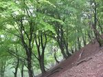 新緑の自然林