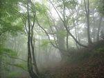 霧中の自然林