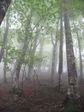 遠敷端の高2008.5.11 031.jpg