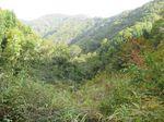 奥美濃、三国岳 011.jpg