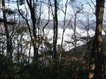 自然林と雲海