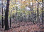 美山の自然林jpg