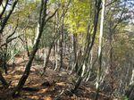 自然林.jpg