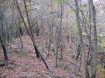 またまた自然林