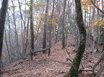 またまた自然林.jpg