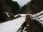 残雪の林道を行く.jpg