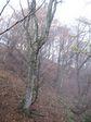 芦生 ハナノ谷段山2007.11.18 018.jpg