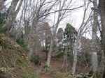 若狭 芦原山〜三国山 2006.11.26 095.jpg