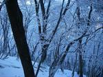 樹氷その1