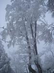 氷ノ山の樹氷